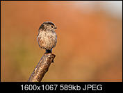 Kliknij obrazek, aby uzyskać większą wersję  Nazwa:J28A1498-D-2.JPG Wyświetleń:1226 Rozmiar:588,7 KB ID:219097