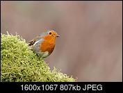 Kliknij obrazek, aby uzyskać większą wersję  Nazwa:J28A1750.JPG Wyświetleń:45 Rozmiar:806,6 KB ID:219098