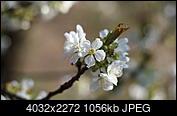 Kliknij obrazek, aby uzyskać większą wersję  Nazwa:P4105212.JPG Wyświetleń:67 Rozmiar:1,03 MB ID:189631