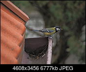 Kliknij obrazek, aby uzyskać większą wersję  Nazwa:OI000311.JPG Wyświetleń:135 Rozmiar:6,62 MB ID:211517