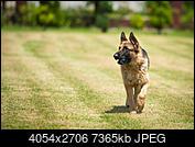 Kliknij obrazek, aby uzyskać większą wersję  Nazwa:1DS_7588.jpg Wyświetleń:20 Rozmiar:7,19 MB ID:212152