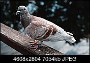 Kliknij obrazek, aby uzyskać większą wersję  Nazwa:P6160607.jpg Wyświetleń:16 Rozmiar:6,89 MB ID:223627