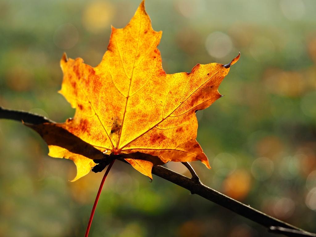 Nazwa:  jesień.jpg Wyświetleń: 887 Rozmiar:  543,5 KB