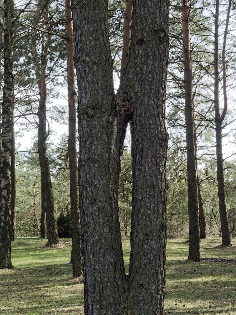 Nazwa:  drzewo.jpg Wyświetleń: 152 Rozmiar:  1,31 MB
