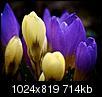 Kliknij obrazek, aby uzyskać większą wersję  Nazwa:P32-Version.jpg Wyświetleń:86 Rozmiar:713,9 KB ID:60404