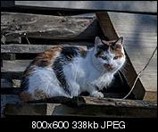 Kliknij obrazek, aby uzyskać większą wersję  Nazwa:p1330046.jpg Wyświetleń:122 Rozmiar:338,4 KB ID:140717