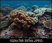 Kliknij obrazek, aby uzyskać większą wersję  Nazwa:PC063639.jpg Wyświetleń:153 Rozmiar:397,2 KB ID:187676