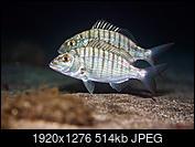 Kliknij obrazek, aby uzyskać większą wersję  Nazwa:PB260564.jpg Wyświetleń:12 Rozmiar:514,1 KB ID:216820