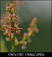 Kliknij obrazek, aby uzyskać większą wersję  Nazwa:P7040478.JPG Wyświetleń:46 Rozmiar:1,72 MB ID:235303