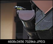 Kliknij obrazek, aby uzyskać większą wersję  Nazwa:OI000307.JPG Wyświetleń:131 Rozmiar:6,86 MB ID:211516