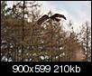 Kliknij obrazek, aby uzyskać większą wersję  Nazwa:P4288444.jpg Wyświetleń:275 Rozmiar:209,7 KB ID:87224