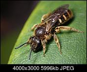 Kliknij obrazek, aby uzyskać większą wersję  Nazwa:P4261026.jpg Wyświetleń:34 Rozmiar:5,86 MB ID:233154