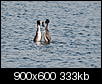 Kliknij obrazek, aby uzyskać większą wersję  Nazwa:P4288457.jpg Wyświetleń:299 Rozmiar:332,8 KB ID:87226