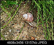 Kliknij obrazek, aby uzyskać większą wersję  Nazwa:P6200122.jpg Wyświetleń:35 Rozmiar:12,85 MB ID:224243