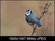Kliknij obrazek, aby uzyskać większą wersję  Nazwa:smaill.jpg Wyświetleń:48 Rozmiar:684,3 KB ID:219095