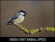 Kliknij obrazek, aby uzyskać większą wersję  Nazwa:J28A1629s.JPG Wyświetleń:39 Rozmiar:646,2 KB ID:219102