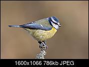 Kliknij obrazek, aby uzyskać większą wersję  Nazwa:J28A2641.JPG Wyświetleń:41 Rozmiar:785,6 KB ID:219104