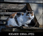Kliknij obrazek, aby uzyskać większą wersję  Nazwa:p1330046.jpg Wyświetleń:143 Rozmiar:338,4 KB ID:140717