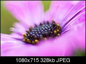 Kliknij obrazek, aby uzyskać większą wersję  Nazwa:_DSC2839.jpg Wyświetleń:33 Rozmiar:328,1 KB ID:215656