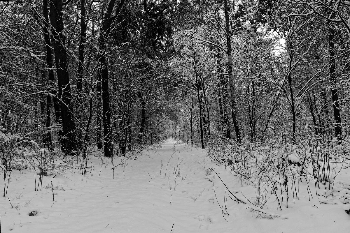 Nazwa:  las.jpg Wyświetleń: 93 Rozmiar:  1,02 MB