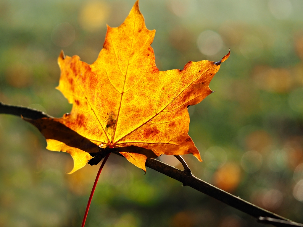 Nazwa:  jesień.jpg Wyświetleń: 845 Rozmiar:  543,5 KB