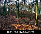 Kliknij obrazek, aby uzyskać większą wersję  Nazwa:P1300101.jpg Wyświetleń:110 Rozmiar:1,12 MB ID:208376