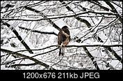 Kliknij obrazek, aby uzyskać większą wersję  Nazwa:B.jpg Wyświetleń:60 Rozmiar:210,6 KB ID:230510