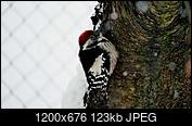 Kliknij obrazek, aby uzyskać większą wersję  Nazwa:C.jpg Wyświetleń:43 Rozmiar:123,1 KB ID:230511