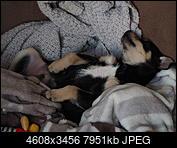Kliknij obrazek, aby uzyskać większą wersję  Nazwa:P2050116.JPG Wyświetleń:24 Rozmiar:7,76 MB ID:230681