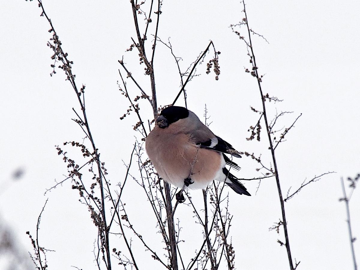 Nazwa:  ptak.jpg Wyświetleń: 133 Rozmiar:  813,7 KB