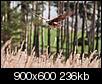 Kliknij obrazek, aby uzyskać większą wersję  Nazwa:P4288445.jpg Wyświetleń:301 Rozmiar:235,7 KB ID:87225