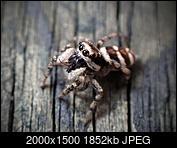 Kliknij obrazek, aby uzyskać większą wersję  Nazwa:Skakun.jpg Wyświetleń:38 Rozmiar:1,81 MB ID:233132
