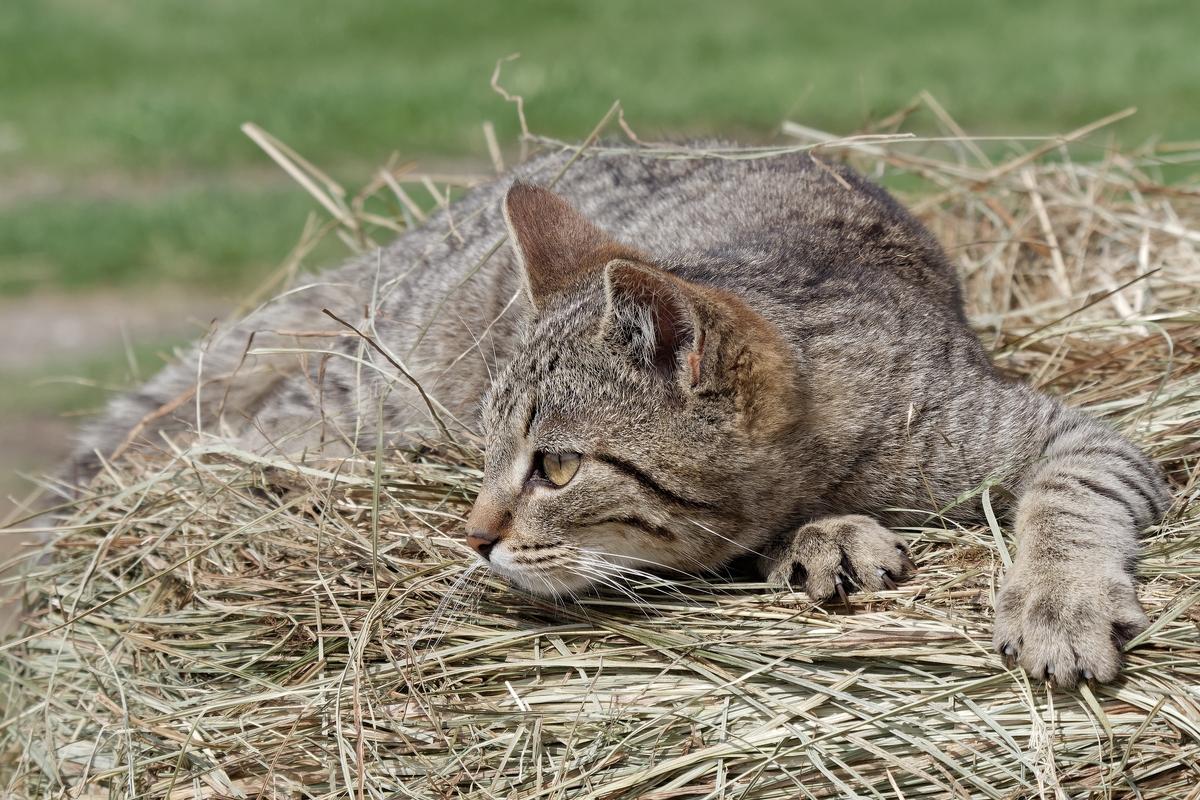 Nazwa:  kot.jpg Wyświetleń: 56 Rozmiar:  895,4 KB