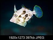Kliknij obrazek, aby uzyskać większą wersję  Nazwa:PB260557.jpg Wyświetleń:11 Rozmiar:397,3 KB ID:216821
