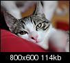 Kliknij obrazek, aby uzyskać większą wersję  Nazwa:DSC_6349_web.jpg Wyświetleń:215 Rozmiar:113,9 KB ID:77228