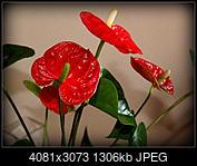 Kliknij obrazek, aby uzyskać większą wersję  Nazwa:P4217002.jpg Wyświetleń:52 Rozmiar:1,28 MB ID:189897