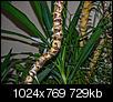 Kliknij obrazek, aby uzyskać większą wersję  Nazwa:m_20140308-P1150320.jpg Wyświetleń:130 Rozmiar:729,0 KB ID:112252