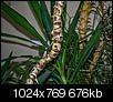 Kliknij obrazek, aby uzyskać większą wersję  Nazwa:m_20140308-P1150321.jpg Wyświetleń:139 Rozmiar:675,7 KB ID:112253