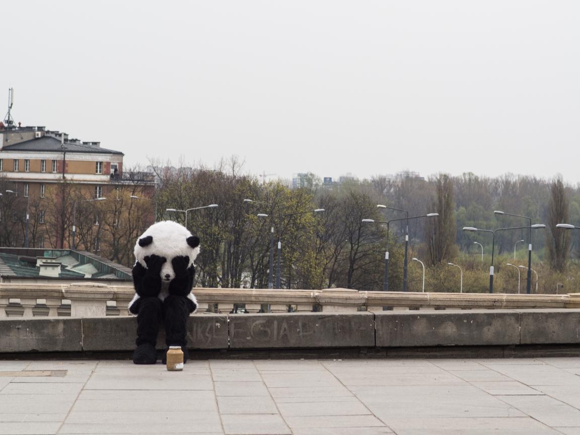Kliknij obrazek, aby uzyskać większą wersję  Nazwa:panda.jpg Wyświetleń:160 Rozmiar:561,4 KB ID:114726