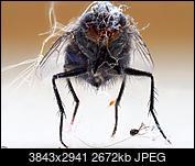 Kliknij obrazek, aby uzyskać większą wersję  Nazwa:mucha.jpg Wyświetleń:31 Rozmiar:2,61 MB ID:222091