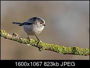 Kliknij obrazek, aby uzyskać większą wersję  Nazwa:J28A1286-D-3.JPG Wyświetleń:56 Rozmiar:822,6 KB ID:219096