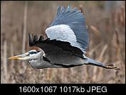 Kliknij obrazek, aby uzyskać większą wersję  Nazwa:IMG_0484-D.JPG Wyświetleń:51 Rozmiar:1.016,7 KB ID:219099
