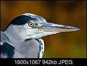 Kliknij obrazek, aby uzyskać większą wersję  Nazwa:IMG_5132.JPG Wyświetleń:56 Rozmiar:942,2 KB ID:219100