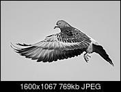 Kliknij obrazek, aby uzyskać większą wersję  Nazwa:J28A0440-D-D-2.JPG Wyświetleń:58 Rozmiar:768,7 KB ID:219103