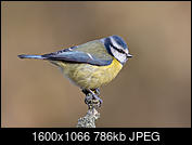 Kliknij obrazek, aby uzyskać większą wersję  Nazwa:J28A2641.JPG Wyświetleń:57 Rozmiar:785,6 KB ID:219104