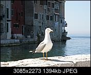 Kliknij obrazek, aby uzyskać większą wersję  Nazwa:P4280210.JPG Wyświetleń:55 Rozmiar:1,36 MB ID:211758