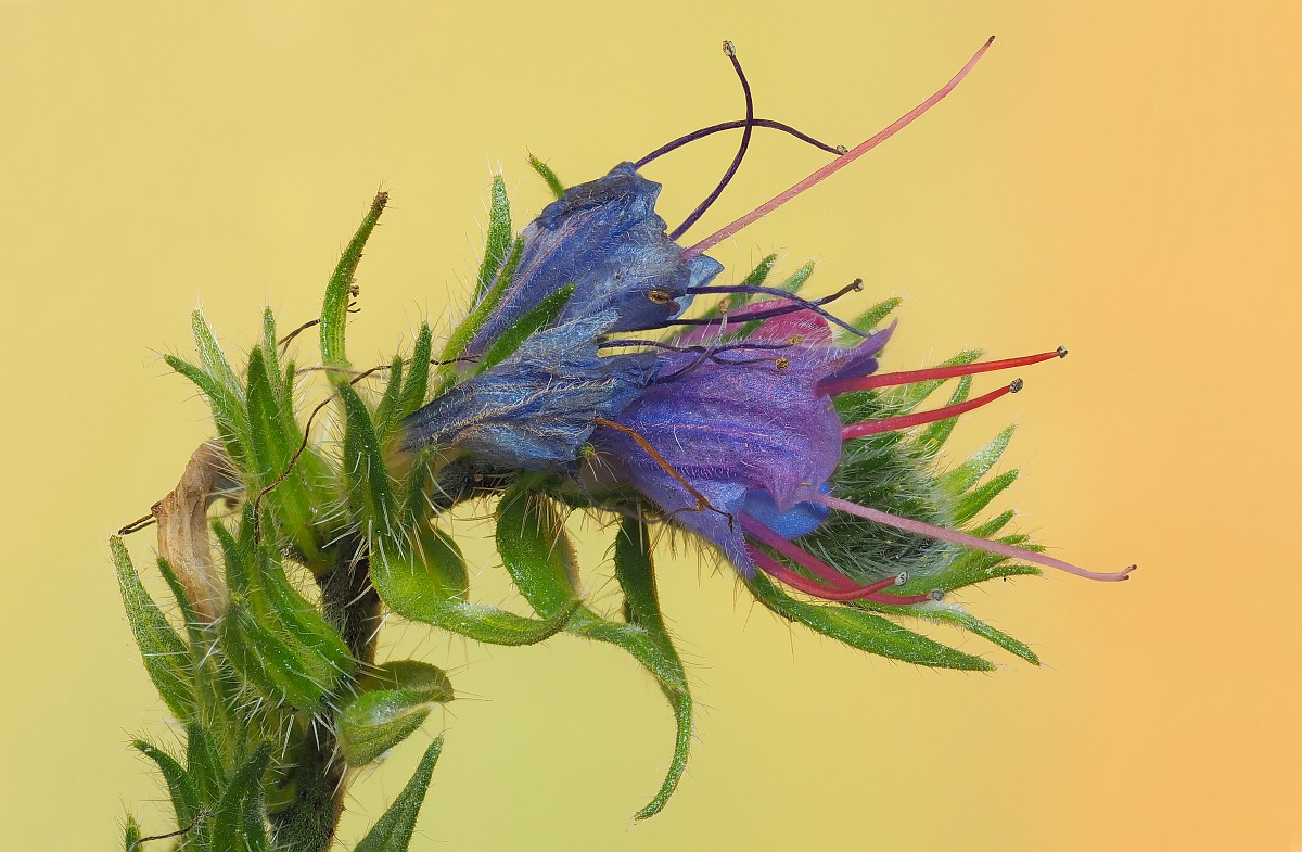 Nazwa:  kwiat25679-96e.jpg Wyświetleń: 4 Rozmiar:  264,8 KB