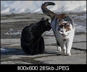Kliknij obrazek, aby uzyskać większą wersję  Nazwa:p1330045.jpg Wyświetleń:126 Rozmiar:284,7 KB ID:140716