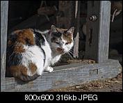 Kliknij obrazek, aby uzyskać większą wersję  Nazwa:p1330051.jpg Wyświetleń:89 Rozmiar:316,5 KB ID:140720