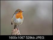 Kliknij obrazek, aby uzyskać większą wersję  Nazwa:J28A1944-D.JPG Wyświetleń:33 Rozmiar:529,1 KB ID:219114